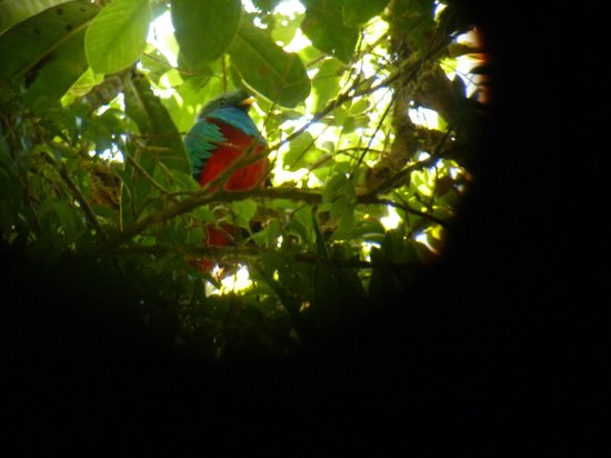 Forest Alive: The resplendent quetzal