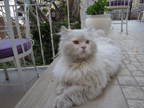 Poem Hotel Istanbul: Hotel Cat, Hamuk