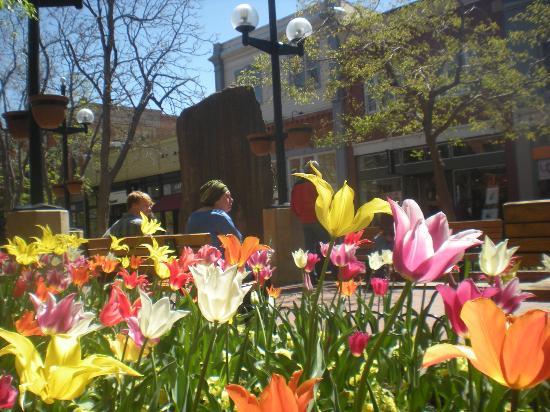 Boulder, Colorado: Pearl Street in Spring