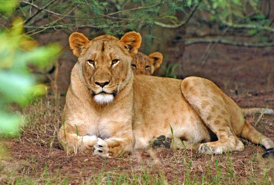 Lalibela Game Reserve: Mother & Cub