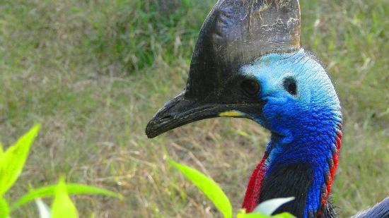 Belen de Escobar, Argentina: Hermosa ave