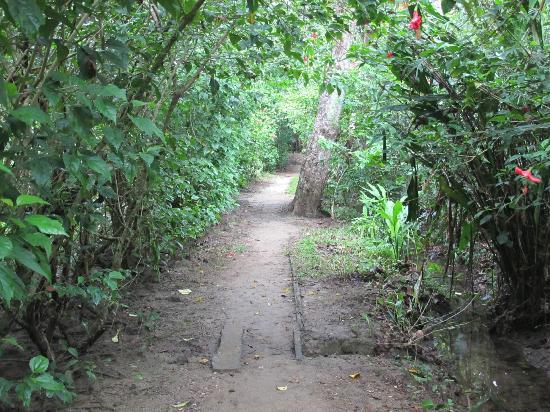 Playa Chiquita Lodge: Path that leads to the beach
