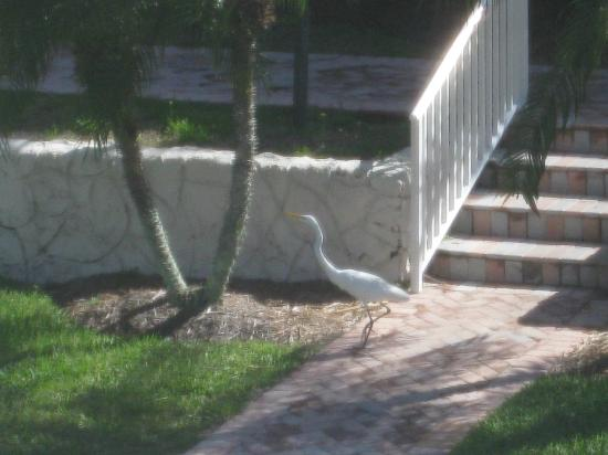 Sanibel Arms West Condominium: A fellow guest at SAW!