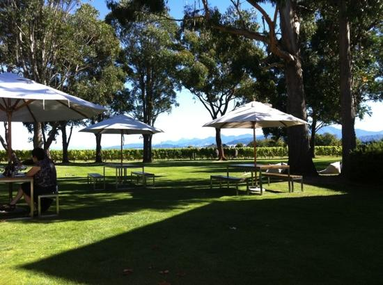 Cloudy Bay: the lawn