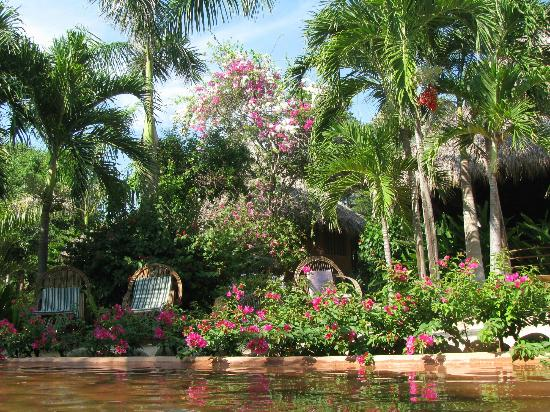 Regalo del Mar Vacation Inn: Beautiful lush vegetation
