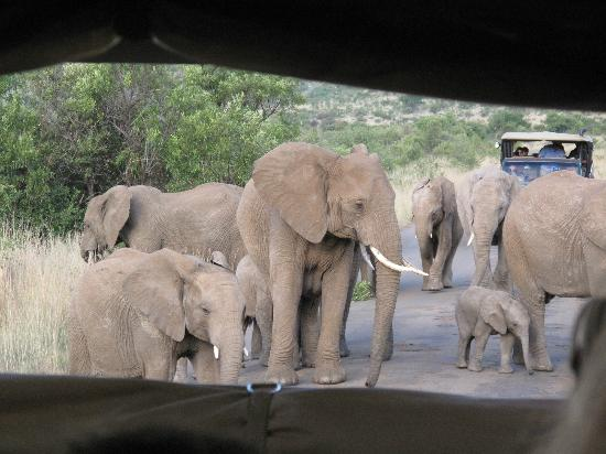 Bakubung Bush Lodge: Elephant family on our game drive