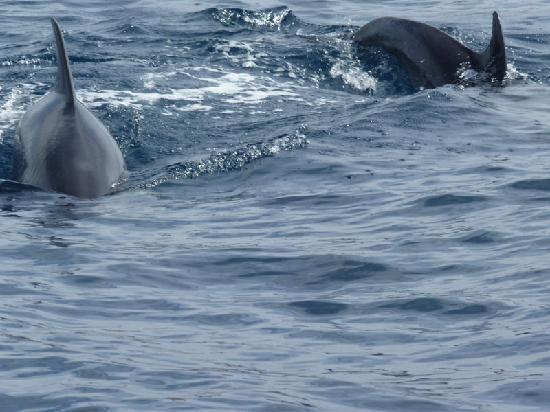 Luna Falesia Mar: Dolphin spotting trip - very fast boats!!