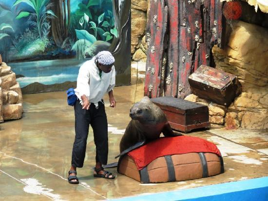 Durban, Südafrika: The seal show