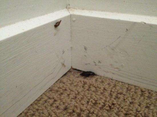 Oaks Lagoons: bugs, not cleaned