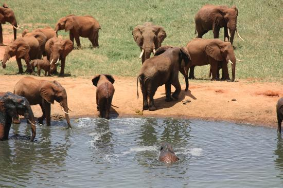 Six Continents Day Tours and Safaris: elephants
