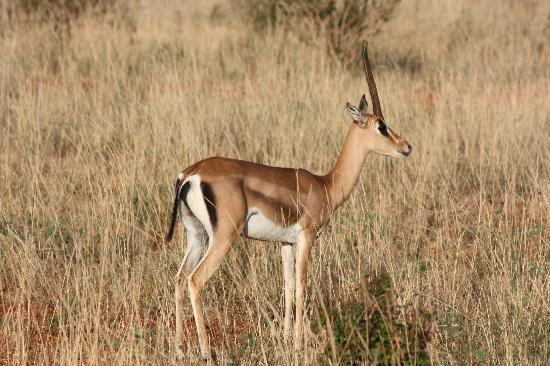 Six Continents Day Tours and Safaris: antelope