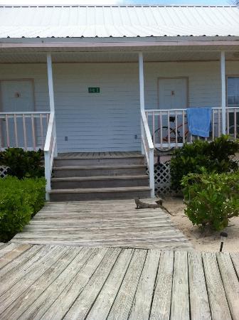 Paradise Villas: Front porch with iguana