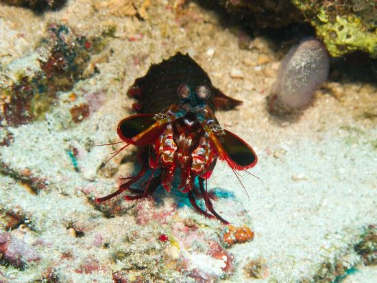 Living Colours Dive Resort 사진