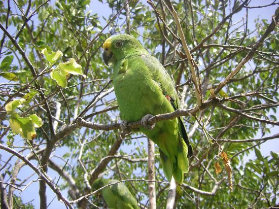 Hostal Cariguana: one of the local pet parrots
