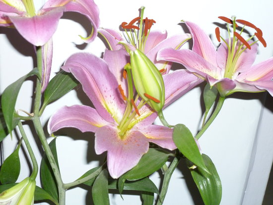 Maya's Nest: Close up of our own lillies