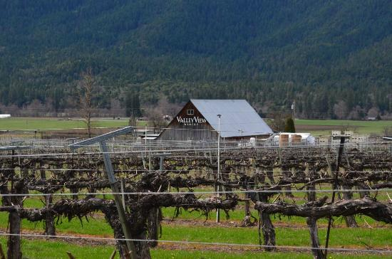 Valley View Winery: View of their vineyards from outside the tasting room