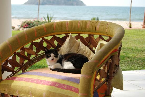 "Casa de Ensuenos B & B: best ""watch kitty"""