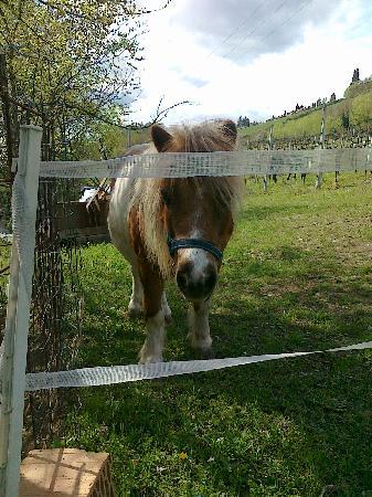 Agriturismo Fattoria Quercia: pony