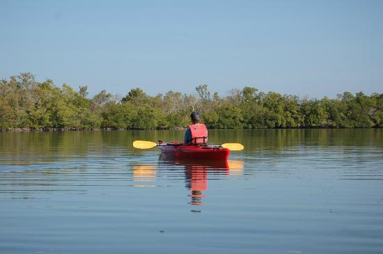 Naples Kayak Company: Rookery Estuary
