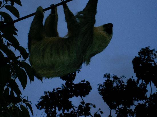 Cabinas Iguana: Vimos este hermoso oso perezoso en la entrada de las cabinas
