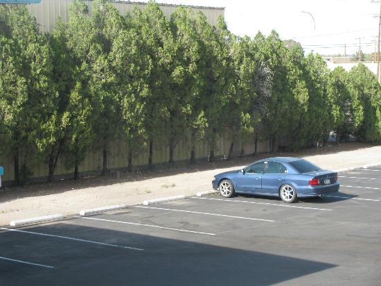 A Day's End Lodge : Mature trees by the parking area...