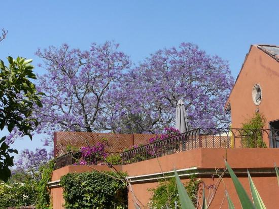 La Casa de Liza: Jacaranda Trees over Suite Cielo