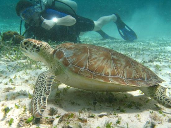 Xanadu Island Resort: Hol Chan