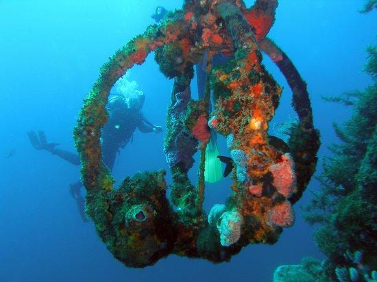 Cape Dive
