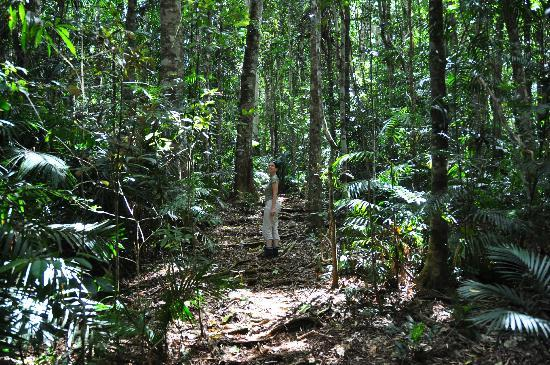 Chambers Wildlife Rainforest Lodges: Walking tracks