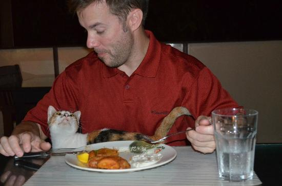 The Last Frontier Boutique Resort: Peanut the cat is very friendly - when she isn't eating moths!