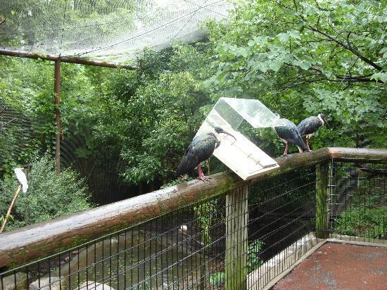 Bird sanctuary - Picture of Kansas City Zoo - TripAdvisor