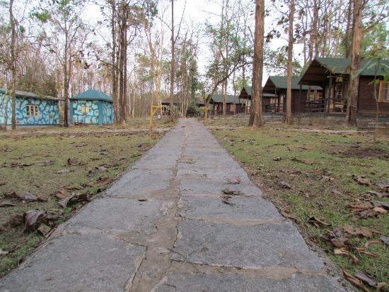 Kulgi Nature Camp: Path way