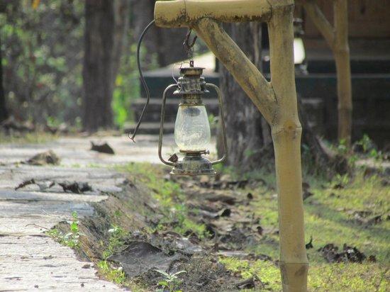 Kulgi Nature Camp: The Lantern