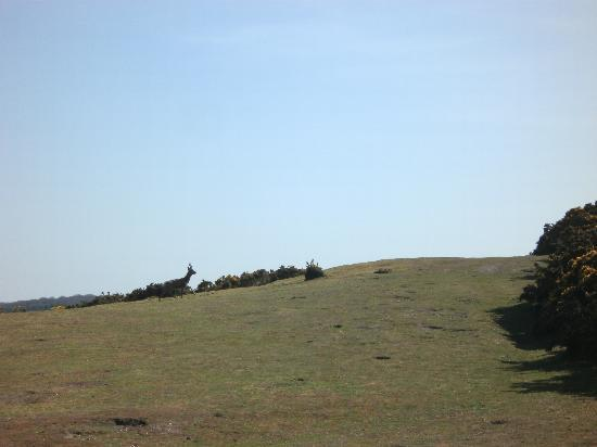 West Runton Camping and Caravanning Site: Plenty of deer and horses to see on Incleborough Hill near the campsite.