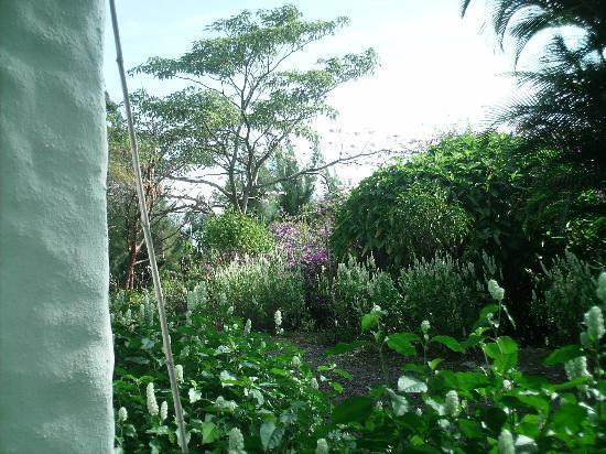 Villa Escazu: flowers all around