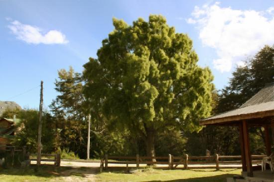 Cabanas El Maiten: Cabañas El Maitén