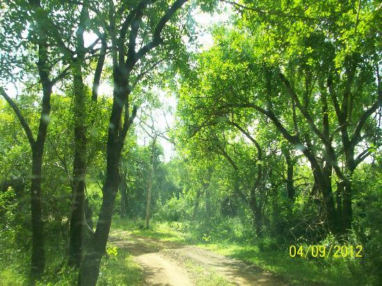 Falaza Game Park & Spa: the sunlit grounds