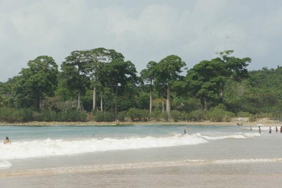 Busua Beach Resort: Big trees on the side of the beach