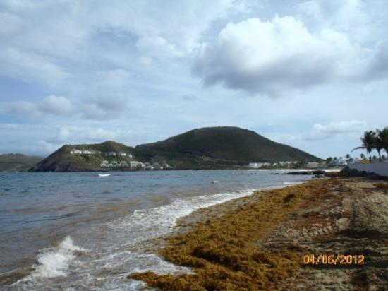 Beach area  Heavy with seaweed - Picture of St  Kitts Marriott