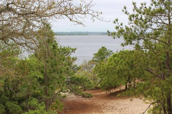 Carolina Beach State Park: View of Cape Fear from top of Sugarloaf Dune