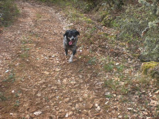Bellone en Provence : ballade dans les bois avec sam