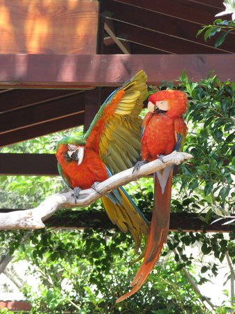 Wildlife Learning Center: Beautiful colorful birds