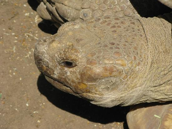 Wildlife Learning Center: Up close witha  turtle