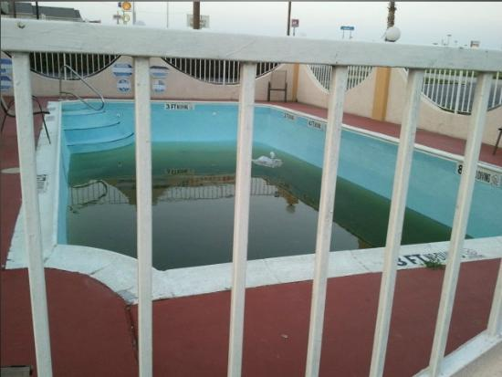Knights Inn Waco: First one in the pool is a rotten egg!