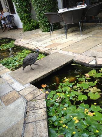 Vineyard Hotel: A friendly guinea fowl on the restaurant terrace