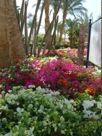 Iberotel Palace : le jardin