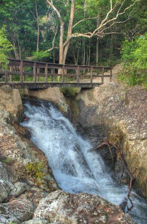 Montville Grove: Part of the Kondalilla falls walk - One of Louises recommendations