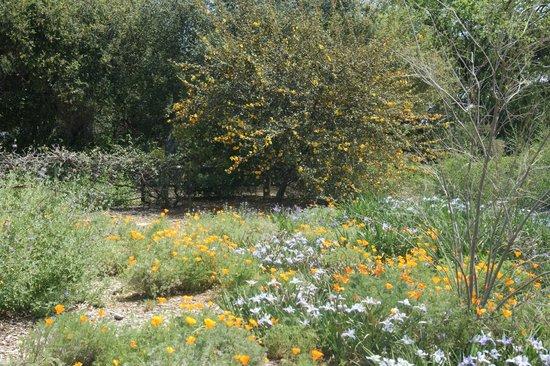 圣塔安那农场植物园