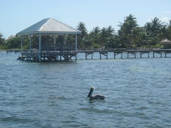 Cocotal Inn & Cabanas: Cocotal pier is easy to identify from the water with the blue palapa roof