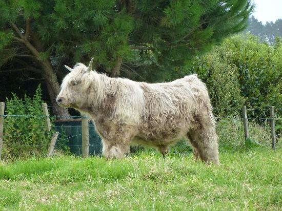The Little Farm, Coromandel: The Little Farm (Coromandel, New Zealand)
